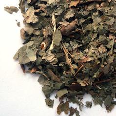 Witchhazel leaf cs