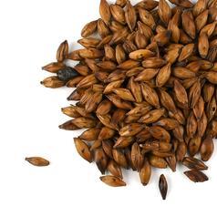 Barleywrst220191114