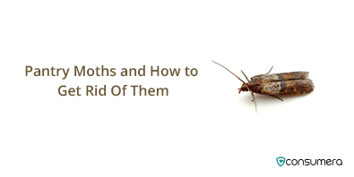 https://s3.amazonaws.com/live.consumera.com/pest-controll/1589103817804_rc_tumb_Pantry_Moths_and_How_to_Get_Rid_Of_Them.png