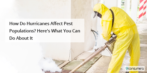 https://s3.amazonaws.com/live.consumera.com/pest-controll/1601583958696_How_Do_Hurricanes_Affect_Pest_Populations_Here's_What _Can_Do_About_It.png