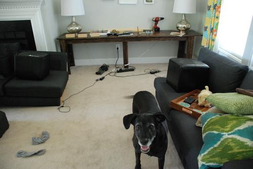broken couch dog