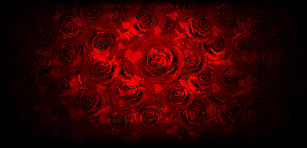 San Valentine's !2 Rosas