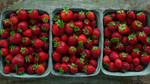 Thumbnail strawberries  22