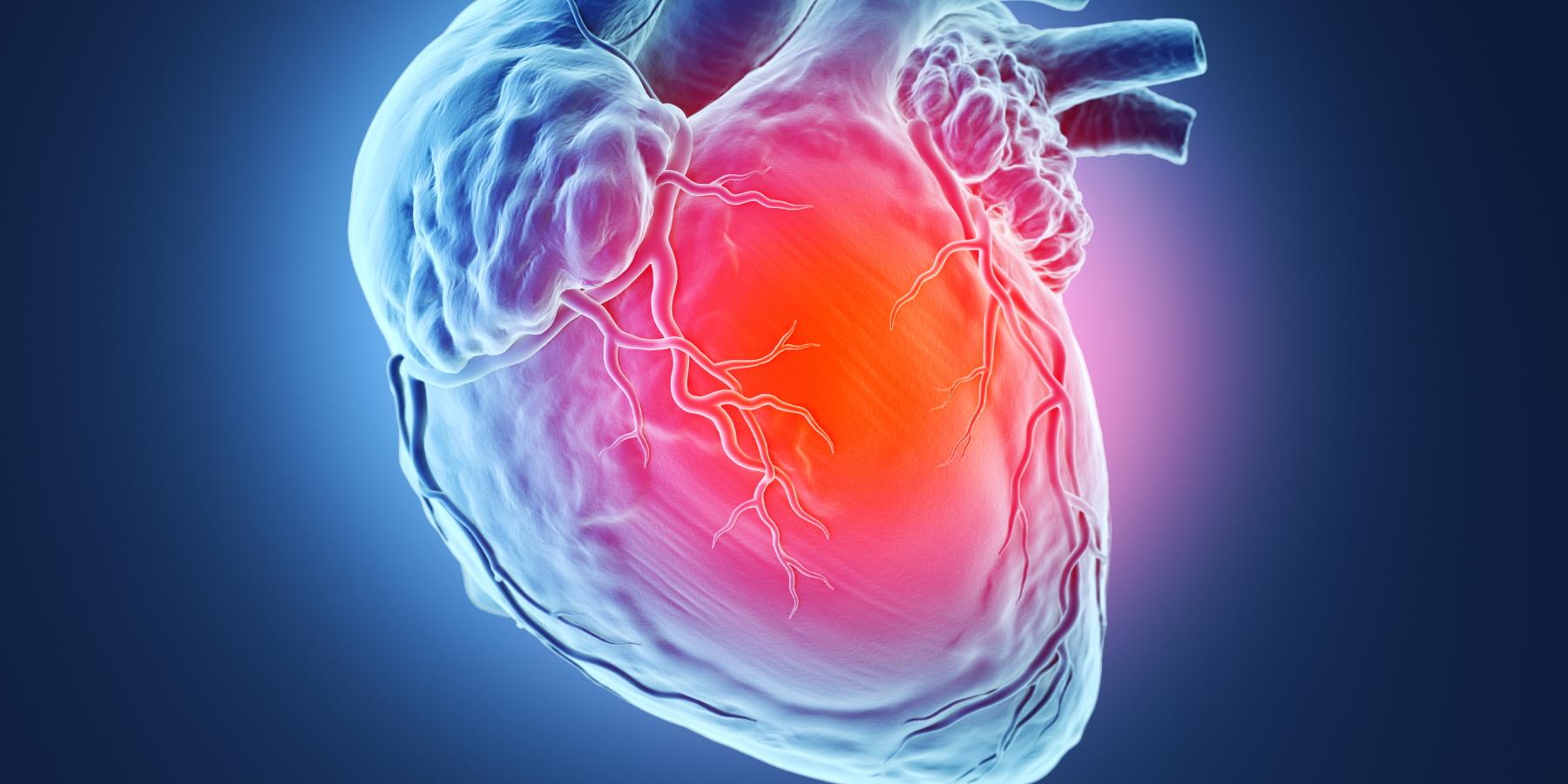 RNA to repair a heart