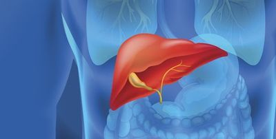 Nucleic acids, virotherapy and liver cancer