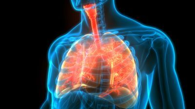 OX40L and CD30L blockade could improve asthma