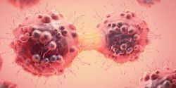 Focus Feature on Cancer Research News: Cellular insights into cancer
