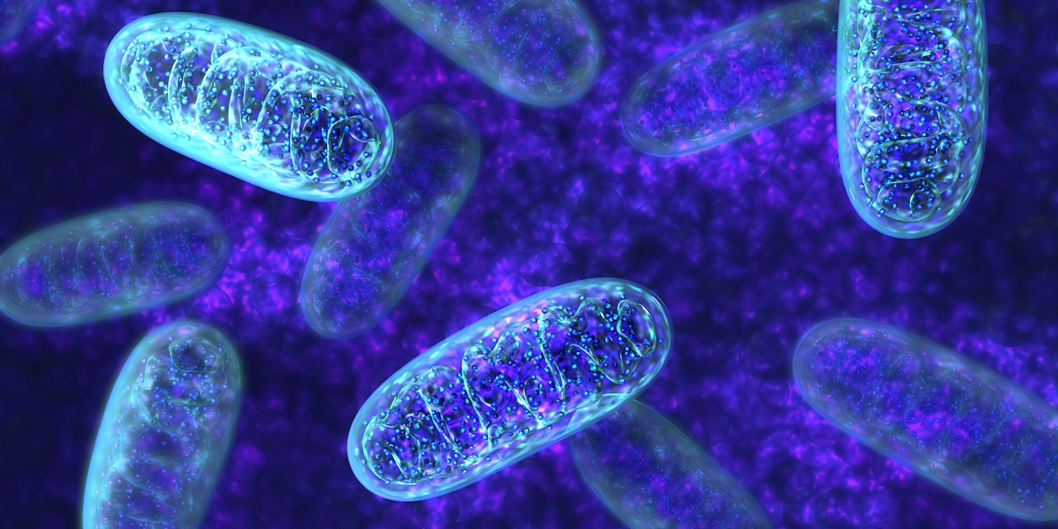 Can mutations in mitochondria lead to autism?