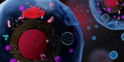 New support for customized exosomes