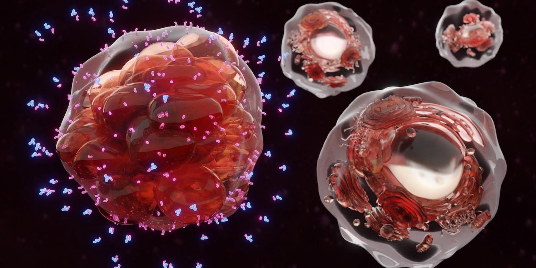 Bright Peak and Ajinomoto collaborate on immunocytokines