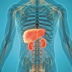 Spotlight on Liver & Kidney Disease
