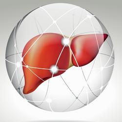 Bile duct organoids help repair human livers