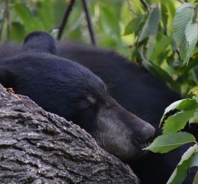 Hibernating animals may help cure complex human disease