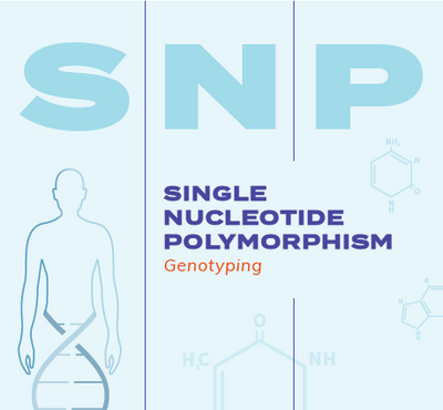 Infographic: Single Nucleotide Polymorphism Genotyping