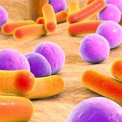 Skin cells use epigenetics to tolerate microorganisms