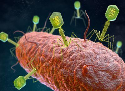 Blocking Antibiotic-Resistant Microbes