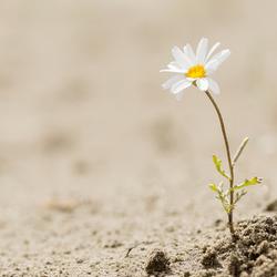 Resiliency in Science