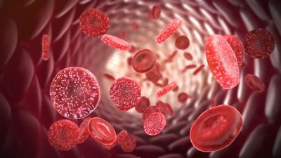 Genetically-engineered red blood cells help train T cells to fight tumors