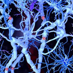 Stem cells jump-start the brain after a stroke