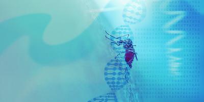 Using CRISPR for disease eradication