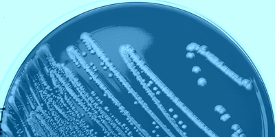 E. coli may hold the key to manufacturing hard-to-make drugs