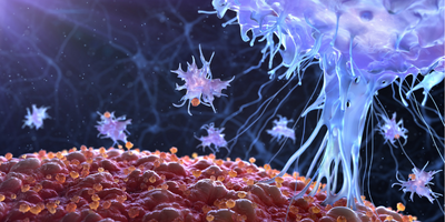 Penetrating Solid Tumors with CAR Immune Cells