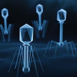 Understanding bacteriophages