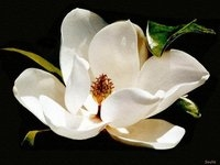 mississippi: magnolia state