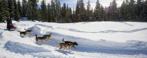 Dog Sled Tours in Whistler