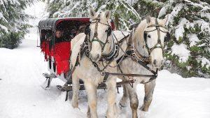 sleigh rides whistler blackcomb