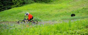 Whistler Mountain Bike Park Bear