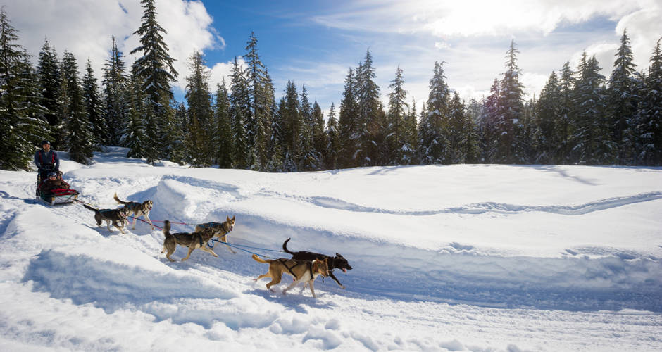 Whistler Dog Sledding