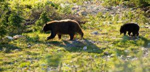 Whistler Bear Tour