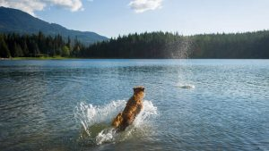 Whistler Pet Friendly Accommodations