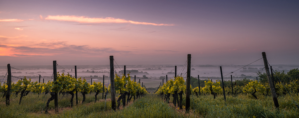 Wine Country Activities Lodging with Opulent Vacations