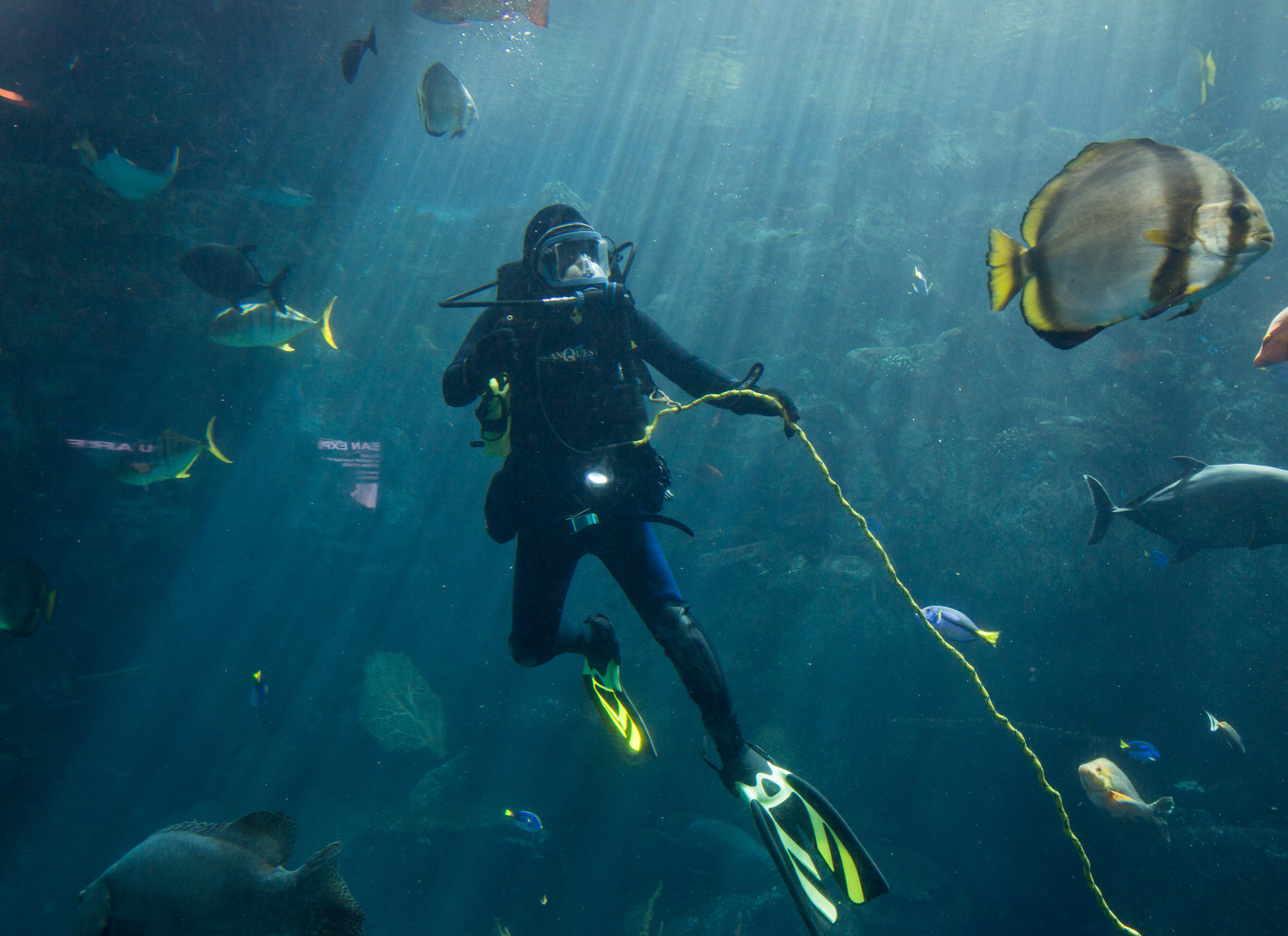 adventure-adventure-fish-underwater-recreation-tropical-fish-diving-outdoor-scuba-aquarium_t20_4JEndy (2)