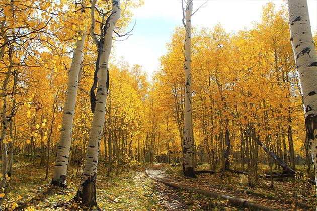 Promo-Tile-Fall-Trees-Autumn-Utopian