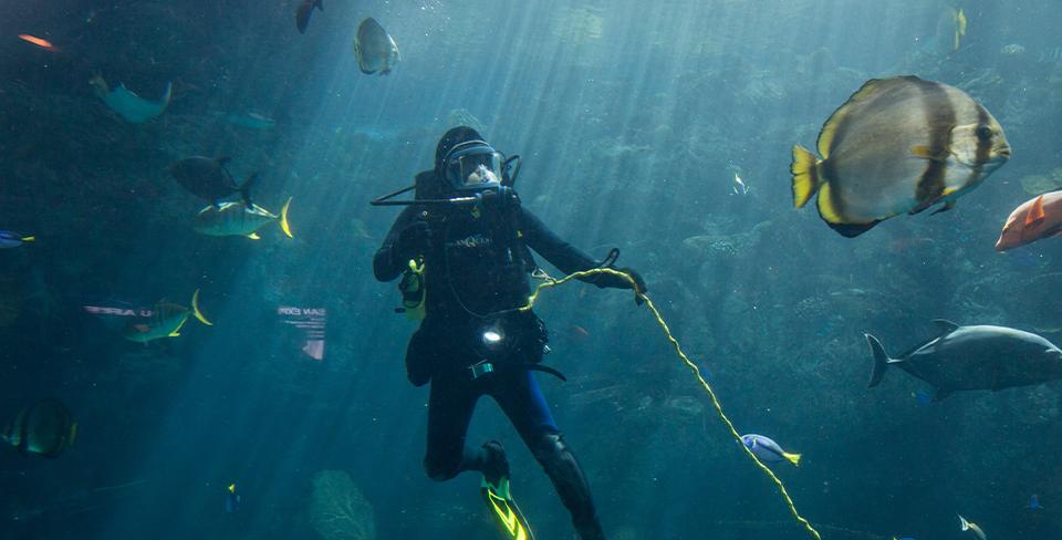 Blog-Full-Width-Image-960w-Diving-Ocean-Fish-Belize