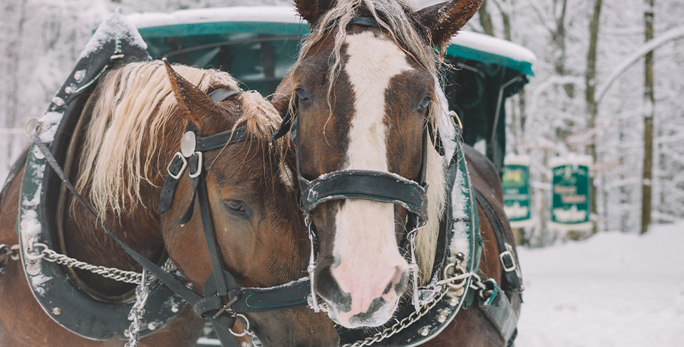 Blog-Full-Width-Image-960w-Horses-Winter-Sleigh