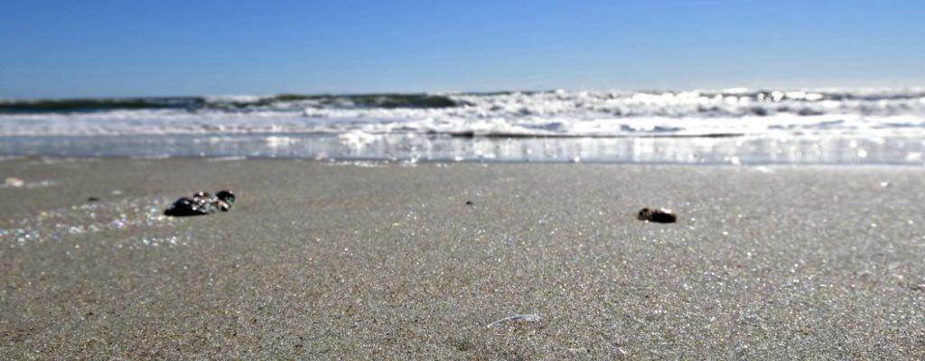 surfside beach header