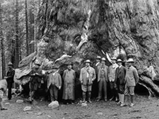 the fight over the redwoods The fight over the redwoods abstract pacific lumber company, founded in 1869, oversees the careful maintenance and logging of the world's most productive timberland pacific lumber holds the last private forest of old-growth redwood.