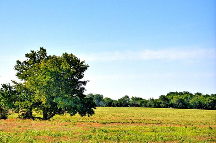 A colorful field with a tree in the right of the picture.