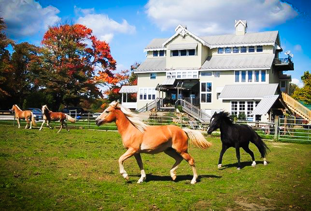 Four horses in front of a large house.