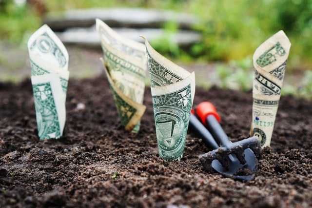 money growing out of ground