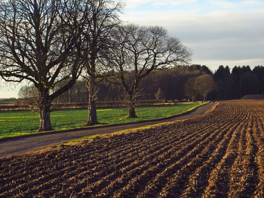 Past lines. lines, contrast, woodland, perspective, soil, trail, tilled, nottinghamshire, threetrees, dusklight, robinhoodway, ilobsterit. buy photo