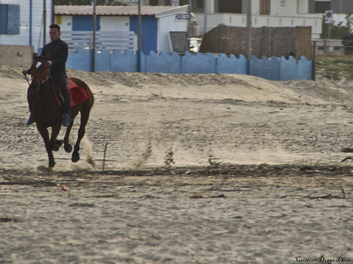 Cavalli e Sabbia. italy, horse, beach, canon, see, sand, italia, sicily, cavalli, cavallo, spiaggia, sella, sicilia, sud, corsa, onde, sabbia, siciliani, trinacria, siciliano, siculi, blondegirl, siculo, schizzi, galoppo, trotto, 650d, flikrsicilia, ilobsterit, cristianodrago. buy photo