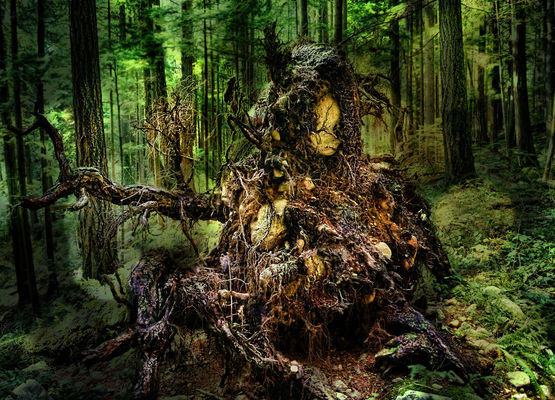 The Uprooted Queen. trees, green, forest, rocks, fingers, roots, queen. buy photo