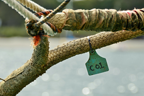 Tagged. dof, bokeh, pov, tag, line, tagged, number, 01, mooring, techniquetuesday, 7daysofshooting, week36numbers. buy photo