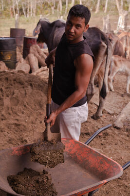 Using Cow Dung for clean energy | Nicaragua. latinamerica, america, canon, cow, energy, bio, gas, 5d, nicaragua, canon5d, managua, ngo, centralamerica, beyondborders, biogas, cowdung, snv, cleanenergy, canon5dmarkii, 5dmark, beyondbordersmedia, beyondbordersutrecht, snvworld, ngoproject, ngoenergy. buy photo