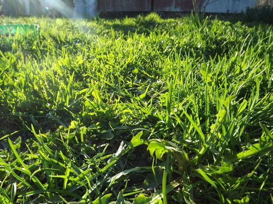 the light on the lawn. buy photo